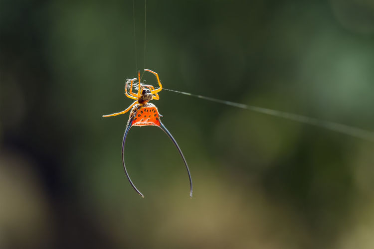 Close-up of insect on spider web