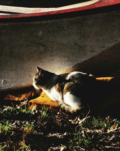 Domestic Animals Pets Animal Themes One Animal Domestic Cat Mammal Feline No People Outdoors Day Trasimenolake
