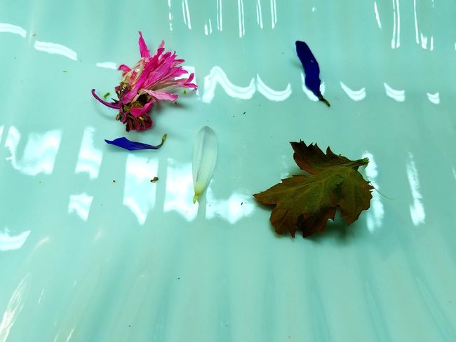 Many Labels for Little Photo! Abstract Photography Animal Themes Animals In The Wild Aquarium Beauty In Nature Bored Buy This Close-up Day Dry Flowers Dry Leaves Floating On Water Flower Flower Head Fragility High Angle View Leaf Leaflet Nature No People Outdoors Plant Water Millennial Pink
