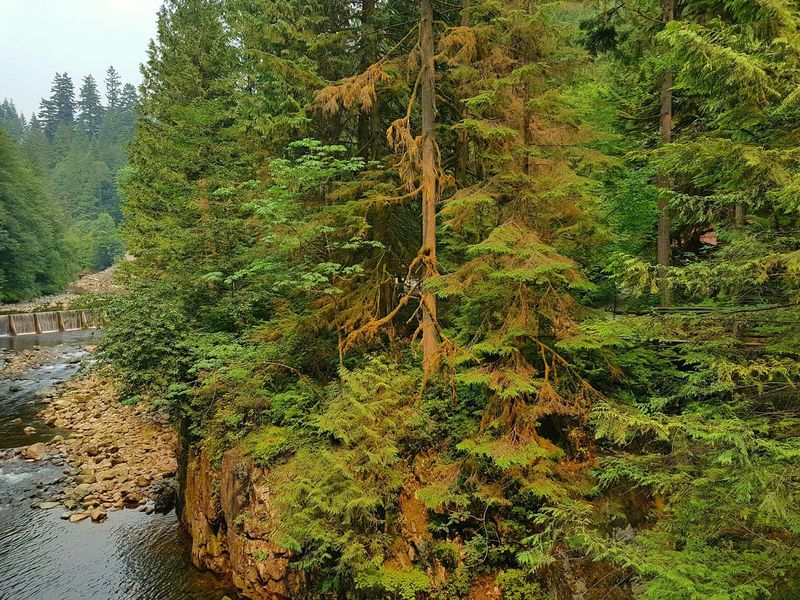 The river, the canyon and the forest