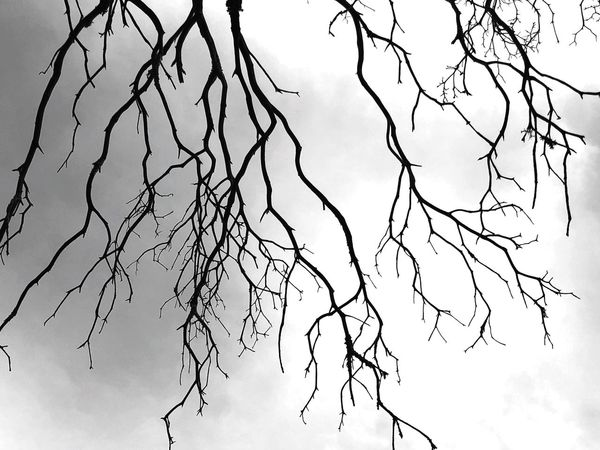 Black Lightening Lightening Nature Sky Tranquility Silhouette Outdoors Cloud - Sky Beauty In Nature Branch Bare Tree