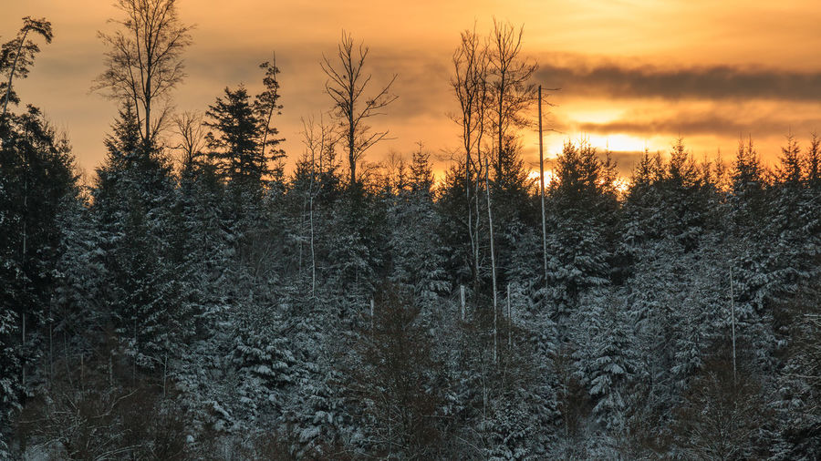 Sonnenaufgang bei Minus 12 Grad am Bergsee in Bad Säckingen Beauty In Nature Black Forest Close-up Day Forest Growth Nature No People Outdoors Scenics Schwarzwald Sky Sunrise Tranquility Tree