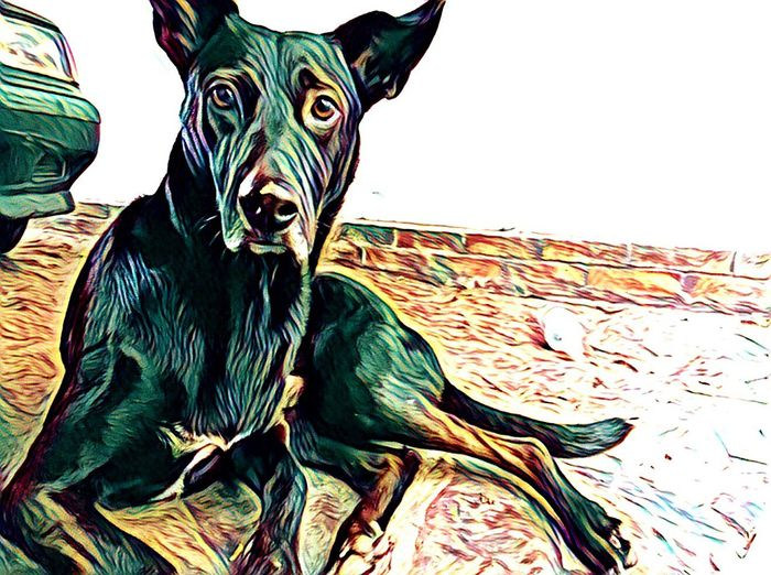 Oliver can ... No People Animal Themes Portrait Alone Colors Psicodelic Dog Animals In The Wild Animal Lover Prisma Coghlan Home Happiness Trip King Chilling