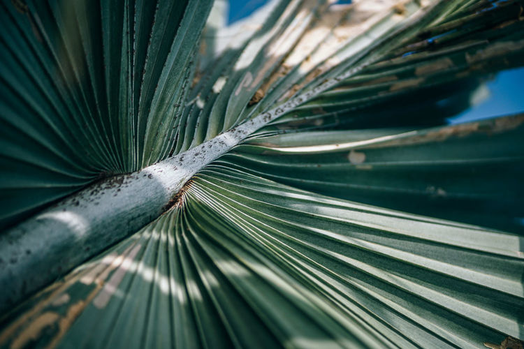 Dry faded green palm branch close up shot at the beach of Koh Phangan. Daylight photograph. Tropical photography. Blaze Bright Dream Green Natural Nature Palm Palm Tree Plant Tree Backgrounds Bay Beam Blue Branch Daylight Leaf Outdoors Outside Paradise Sand Sky Stem Sunshine Tropical