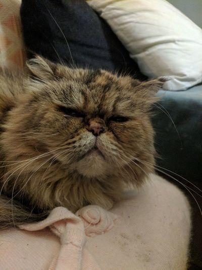 Cat Front