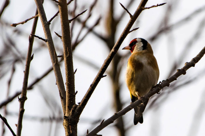 Animal Themes Animal Wildlife Animals In The Wild Beauty In Nature Bird Branch Close-up Day Nature No People One Animal Outdoors Perching Tree Woodpecker
