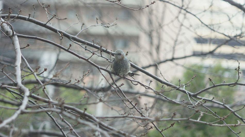 Tree Bird Nature Elmar90mmf4 Elmar Elmar9cmf4 Animal Themes