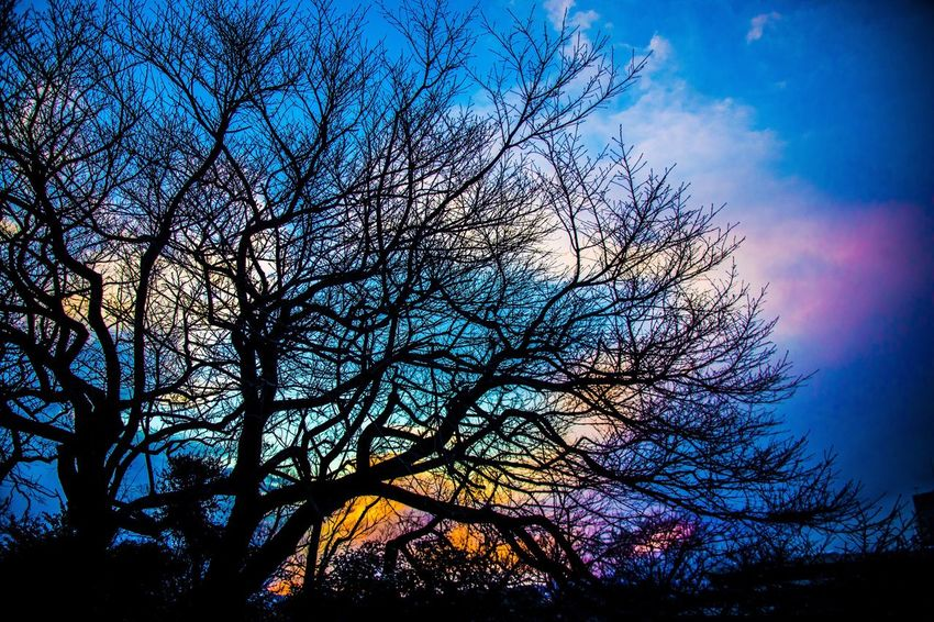 藤沢 つるカメラ 彩雲