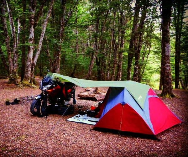 EyeEmNewHere Tree Camping Forest Transportation Day Nature Outdoors Tent Adventure No People First Eyeem Photo