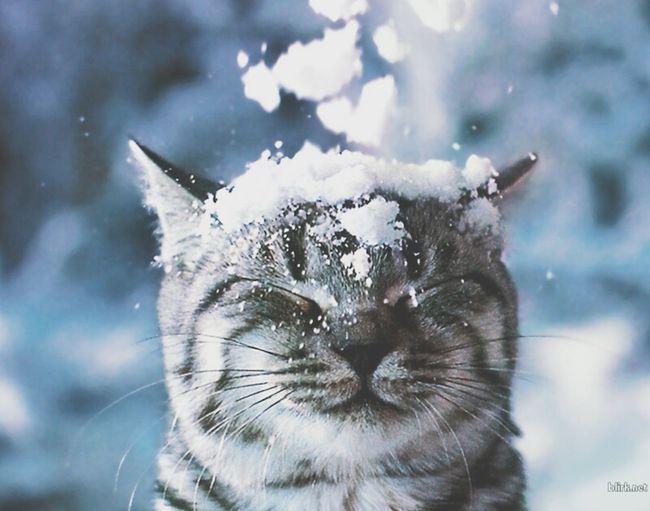 Deepfreeze Snow ❄ Cats 🐱 AnimaLs <3 Cutepets ^^