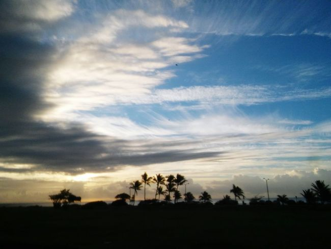 Hawaiian Paradise. Sky Cloud - Sky Sunset Nature Beauty In Nature Outdoors No People Hawaiishots Hawaii My Backyard Living Life With A Smile Oahucoconutsunset Oahu,hawaii Myhawaii Silhouette Tree Scenics Tranquility Dramatic Sky Social Issues Tranquil Scene Star - Space Astronomy Day