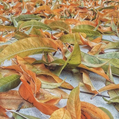 Cyprus Kıbrıs Kibris Lefkoşa Nicosia Arabahmet Winter Leaves Green Orange Yellow Red
