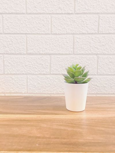 Flowerpot on the table with soft and smooth lighting Pastel Colored White Prop Smooth Light Soft Light Background Photography Wallpaper Indoors  Green Color Built Structure Brick Leaf Flower Pot Plant Part Succulent Plant Nature