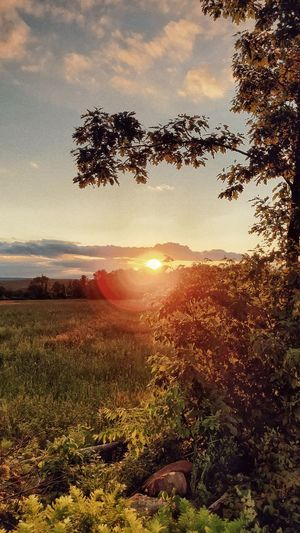 Sun beginning to set Sky Plant Tree Beauty In Nature Sunset Growth Tranquility Sunlight Sun Nature Scenics - Nature Tranquil Scene Cloud - Sky Land No People Field Landscape Sunbeam Environment Lens Flare