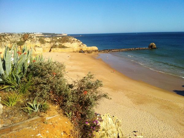 Holiday Portugal Hanging Out Taking Photos Enjoying Life Beachphotography Beach View Beach Front Beach Day Sea And Sky Seaside Plants Sand & Sea Sea Sunny Day