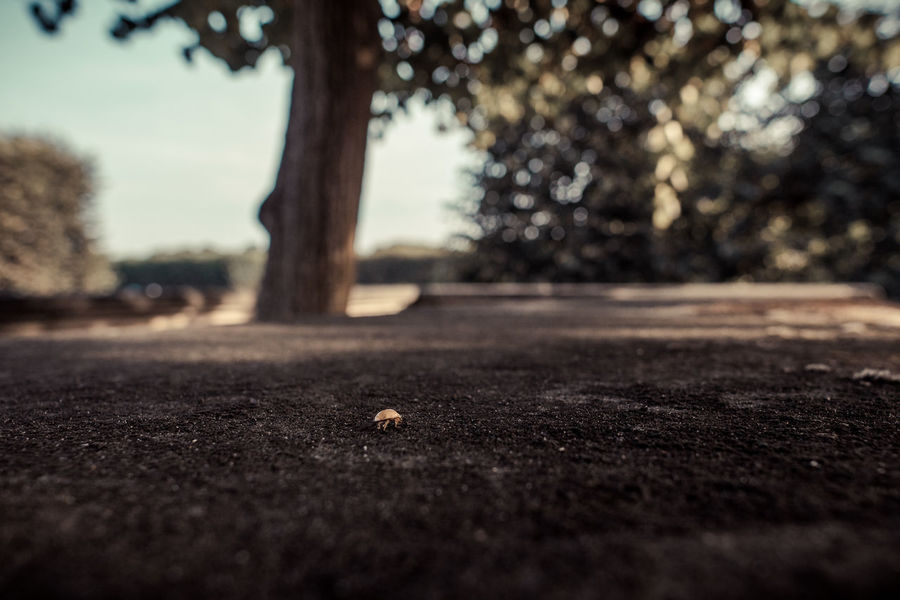 I'm Walking A Bug's Life Bug Coccinella Day Ladybird Marienkäfer No People Selective Focus Surface Level The Way Forward Tranquil Scene Tranquility Tree Tree Trunk Waling Around Walking