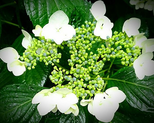 Flowers In Rain Nature Rainy Days☔ Green And White Colour Drops Wet
