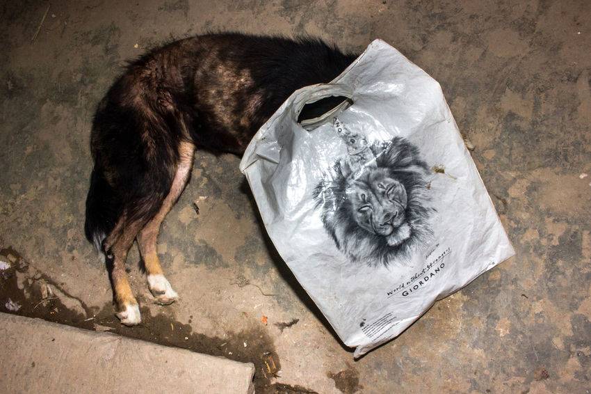 Untitled Animal Themes Close-up Domestic Animals Garbage No People One Animal Paper Pets The Street Photographer - 2017 EyeEm Awards