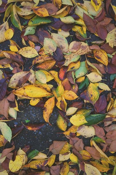 Autumn is here! 🍂🍁🍂 Autumn Fall Full Frame Leaf Leaves Nature Beauty In Nature