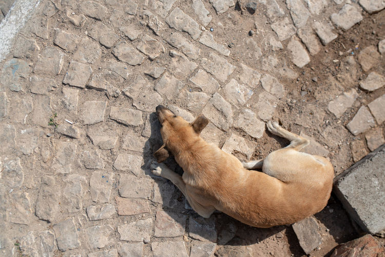Hoffi99 Day Mammal Animal Animal Themes One Animal Vertebrate Domestic Animals Animals In The Wild No People Solid Animal Wildlife Pets Relaxation High Angle View Domestic Lying Down Rock Nature Outdoors Cat Stone Wall