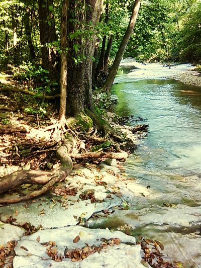 TreesAndWater Riverside Jungle Hello World The Great Outdoors - 2015 EyeEm Awards First Eyeem Photo Rocks Nature Creek Enjoying Life