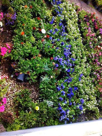 Flowers Flores Y Más Flores Garden Vivero