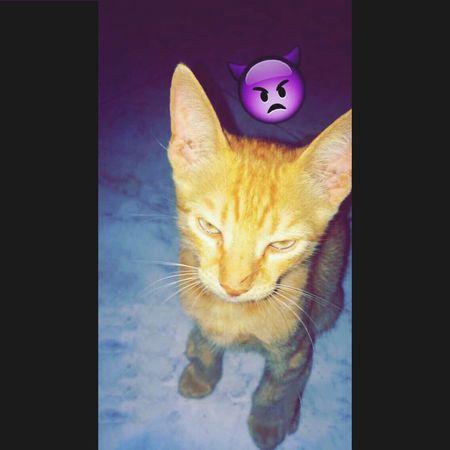 Angrycat 👿😂😂😂!! Cat