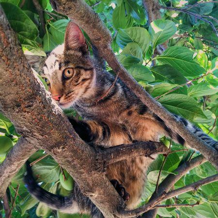 Animal Themes One Animal Tree Feline Nature Domestic Animals