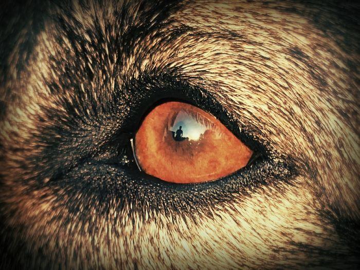 Eyes EyeEm Best Shots - Nature Eye4photography  Look Me In The Eyes Dog Dogs Of EyeEm Animals Pet Friend Seeyou Macro Beauty Dust In The Wind Photographic Memory Inner Power