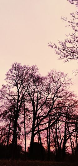 purple morning Photowalktheworld EyeEm Selects Beautiful Clouds Amazing Nature Storms Coming Morning Sunlight Bird Tree Sunset Silhouette Rural Scene Flock Of Birds Sky Landscape Sky Only Romantic Sky Heaven Moody Sky Wispy Stratosphere Cumulonimbus Cumulus Cloud Meteorology Fluffy