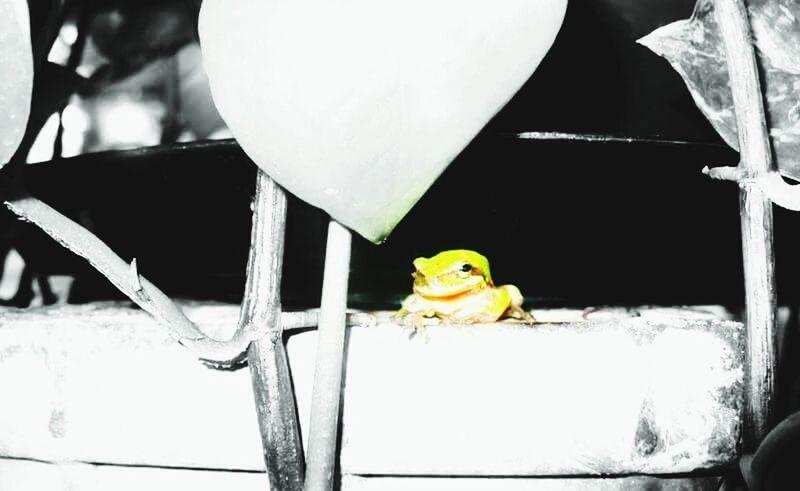 Nature On Your Doorstep Louisianatravel louisiana frog Hello World Relaxing Taking Photos Louisiana Swamp