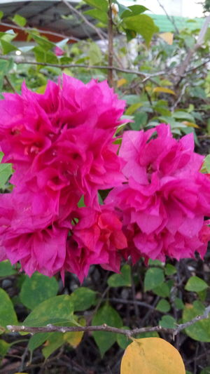 Beautifully Organized Flower Nature Beauty In Nature Fragility Petal Freshness Growth Plant Flower Head Pink Color Blooming Outdoors No People Day Leaf Close-up