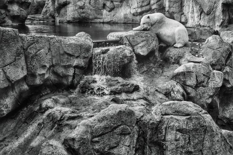 View of sheep on rock at zoo