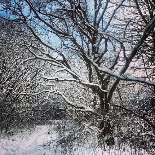 Xmas 2012. Winterphoto Weather WinterSnow Snow Snowblanket