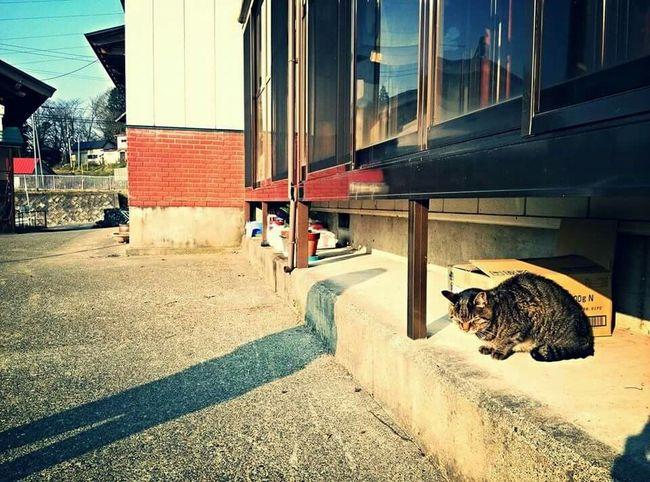 Japan Scenery Cat Cats Of EyeEm Catsagram Japan Photography