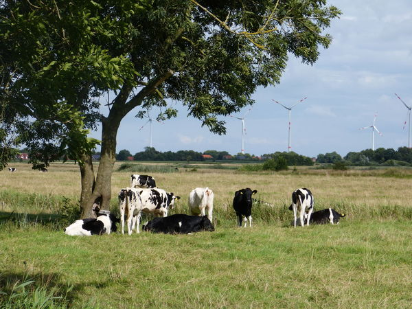 Summertime in Ostfriesland - North Sea - Nordsee - North Germany - Norddeutschland ... :-) Agriculture Breathing Space Farm Farm Life North Sea Region Ostfriesische Landschaft Ostfriesland Ostfriesland Kultur Ostfriesland Landschaft Summertime Wittmund Agriculture Photography Day Farm Work Landleben Landleben Lost Places Landwirtschaft Nature Norddeutschland Nordsee Nordseeküste North Germany North Sea Ostfriesisch Outdoors My Best Travel Photo