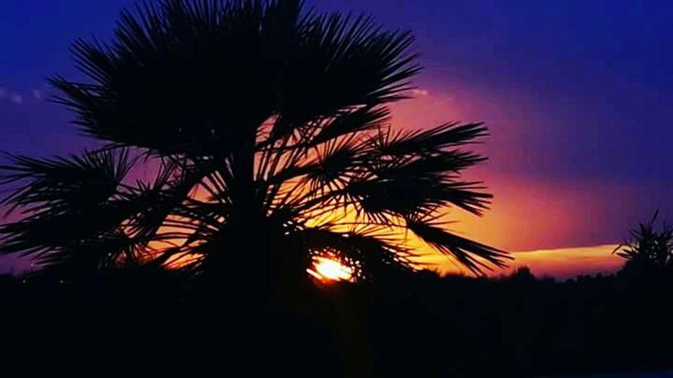 Sunset Allcolors Color Explosion