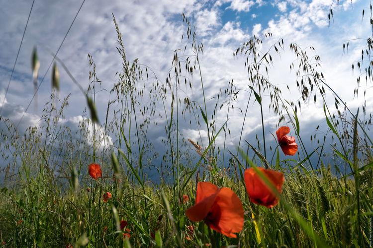 Flowers Growing On Field Against Cloudy Sky