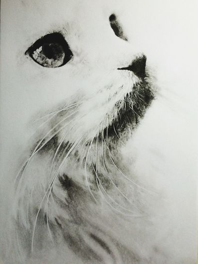 Curiosity Art Drawing  Drawing ✏ Sketchbook Sketch Drawing - Art Product Amateur Drawing Realistic Drawing Realistic Art Pencil Sketch  Pencil Drawing Drawing Sketching