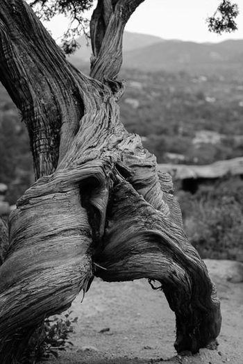 Tree Stump Black & White Nature Landscape Travel Photography
