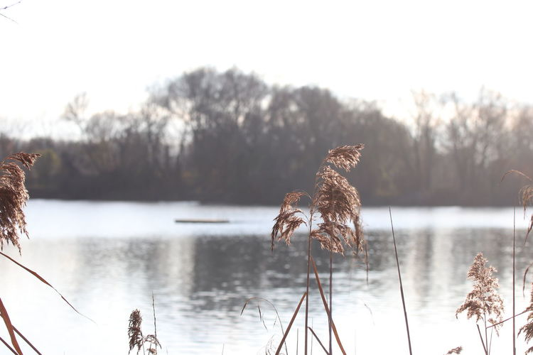 View of birds on lake against sky