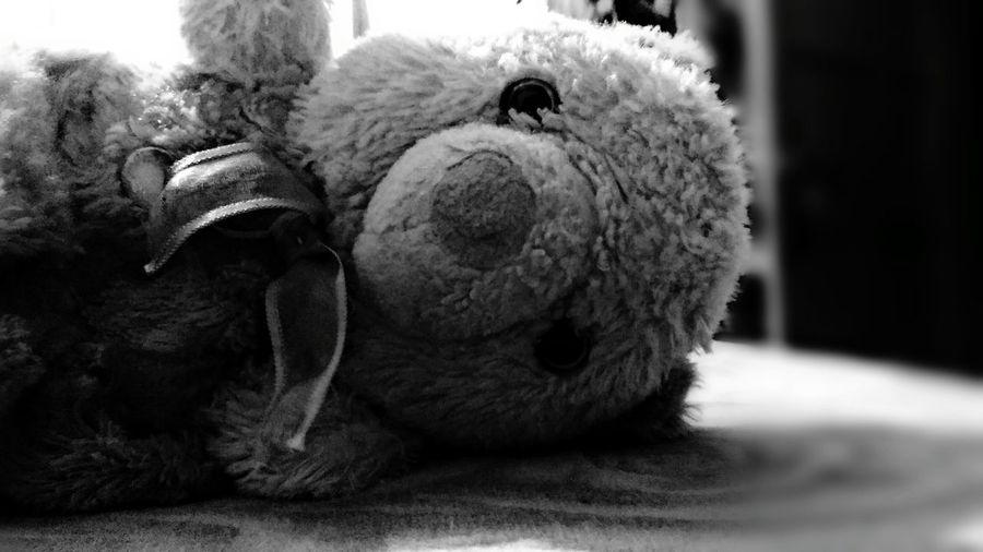 Black And White Blackandwhite Photography Tedy Bear🐻 Teddy Bear No People Indoors  Nightphotography Like4like Followme