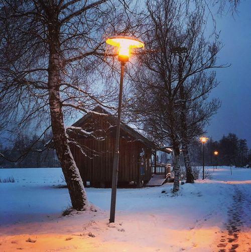 Die Hütte Winter Snow Cold Temperature Tree Nature Bare Tree Sun