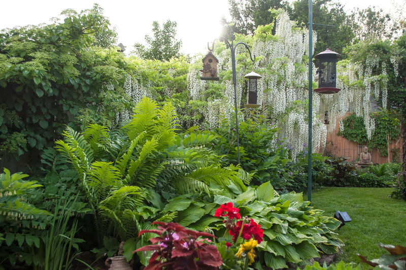 Plants and trees in garden