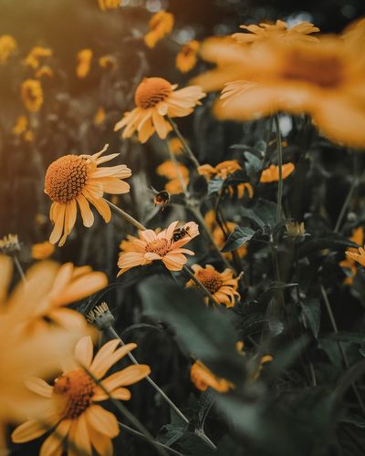 Close-up Growth Beauty In Nature Nature Plant Plant Part Leaf Vulnerability  Outdoors Animal Wildlife Selective Focus Animals In The Wild Flower Head High Angle View Focus On Foreground Flowering Plant Flower Fragility No People Day