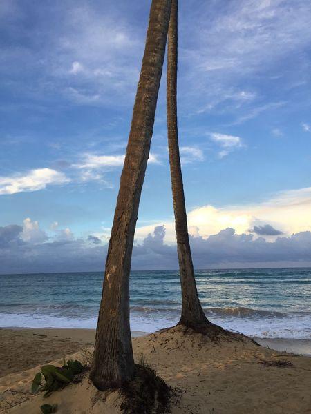 Sea Beach Tranquility Nature Dominicanrepublic Palm Trees