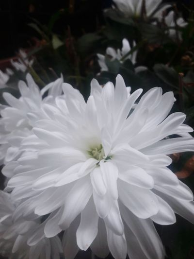 the flower in