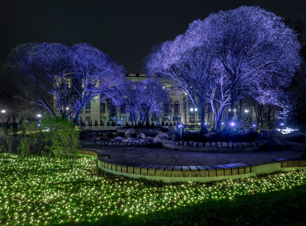 Russia, Moscow, Chistye Prudy, the restaurant is Clean ponds, a Park Architecture Flower Flowerbed Grass Horizontal Nature Night No People Ornamental Garden Outdoors Park - Man Made Space Purple Russia, Moscow, Chistye Prudy, The Restaurant Is Clean Ponds, A Park Travel Destinations
