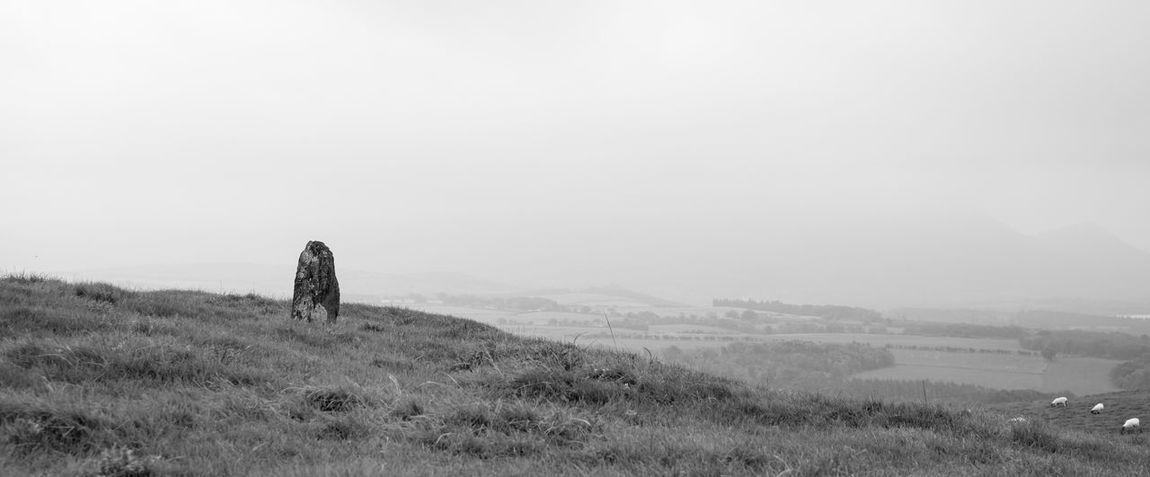 Animal Black & White Black And White Blackandwhite Photography Domestic Animals Field Landscape Landscape Photography Landscape_Collection Landscape_photography Landscapes Mist Misty Misty Morning Misty Mountains  Monochromatic Monochrome Mountain Outdoors Sheep Sheeps Sheep🐑 Standing Stones Stone Stone - Object