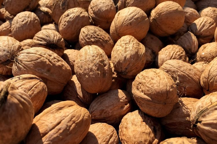 Walnut Walnuts Walnuss Walnüsse
